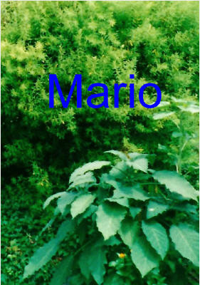 1994 (Mario)