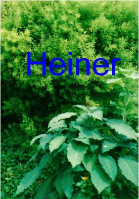 1999 (Heiner)